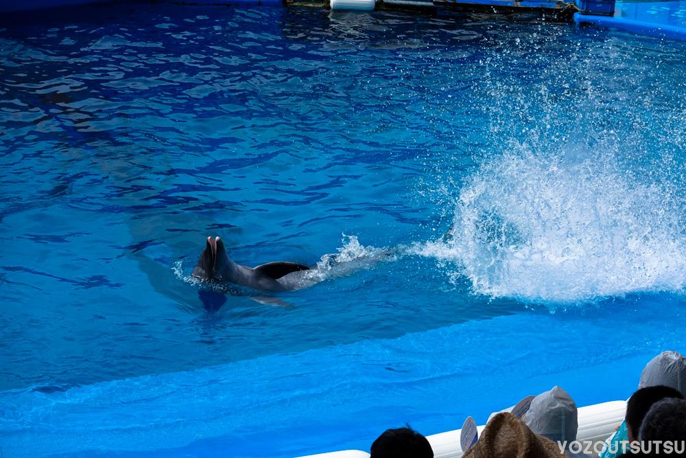 尻尾で水をかけるイルカ