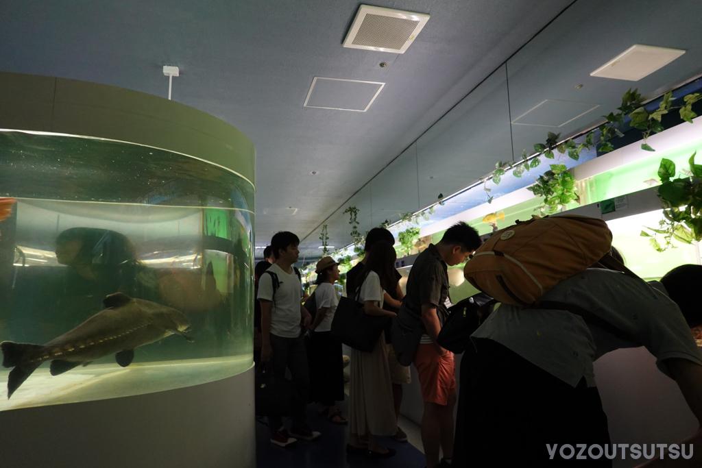 思いのほか混んでる東京タワー水族館の様子