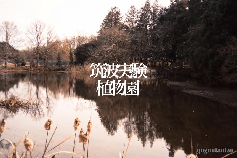 筑波実験植物園の行き方と感想(写真多めで紹介)