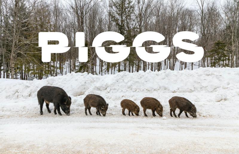PIGGSのクラウドファンディングのリターンが良いぞ【限定ジャケットのHALLO PIGGSとかチェキ】