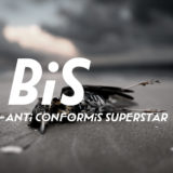 BiS「ANTi CONFORMiST SUPERSTAR」がおすすめ