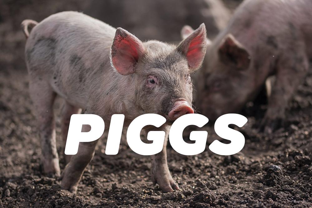 PIGGSがおすすめ・アルバム紹介