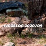 【PIGGS LOG】2020年9月のPIGGSの活動を振り返る【ネットニュースまとめ】