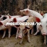 【PIGGS LOG】2020年10月のPIGGSの活動を振り返る【ネットニュースまとめ】