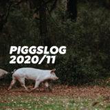 【PIGGS LOG】2020年11月のPIGGSの活動を振り返る【ネットニュースまとめ】