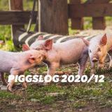 【PIGGS LOG】2020年12月のPIGGSの活動を振り返る【ネットニュースまとめ】
