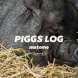 PIGGSの活動を月ごとに振り返る【インタビュー・対談・ネットニュースなどのまとめ】PIGGS LOG
