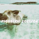 【PIGGS LOG】2021年4月のPIGGSの活動を振り返る【ツイート・ネットニュースまとめ】