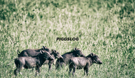 PIGGSの2021年6月の動きをチェック【PIGGS LOG】